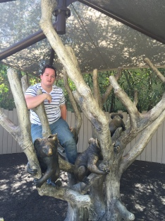 jay is a koala